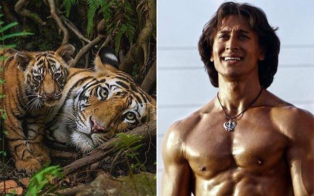 On International Tiger Day, actor Tiger Shroff wrote to the Indian government to save the big cats. Picture courtesy: Instagram/shannonyoung19/Twitter/iTIGERSHROFF