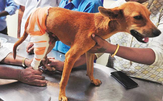Two medical students accused of tossing a dog off from the roof of a tall building were granted bail within minutes of their arrest.