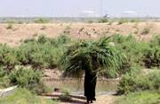 Once ruined by Saddam Hussein, Iraq's marshes now named World Heritage Site