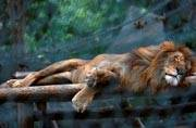 Heartbreaking: 50 animals starved to death because of chronic food shortage in Venezuela zoo
