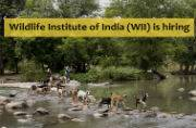 Explore the wildlife! Apply at Wildlife Institute of India (WII) for Scientist, Associate posts before July 30