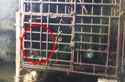 Burden to bear: Lonely bear kept in small cage for 7 years is finally free