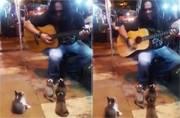 Street Musician Plays For Kittens