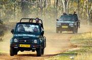 Pench and Tadoba tiger reserves to have monsoon forest safaris