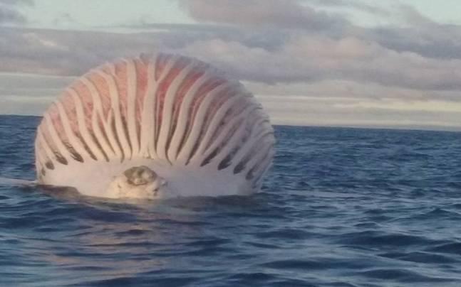 Australian Fisherman Stumped After Spotting Alien Like