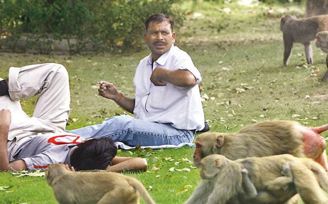 Dogs and Monkeys in Gurgaon