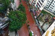 How Dhaka streets transformed into blood streams after Eid sacrifices and rain
