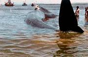 The real win: Locals help rescue mammoth 47-foot blue whale from Maharashtra beach