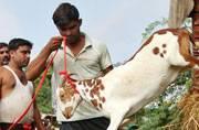 PIL filed seeking end to animal sacrifice on Bakr-Eid