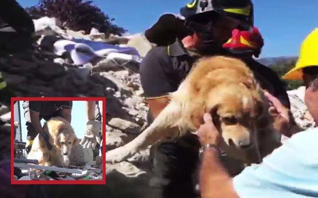 Dog Rescued After He Spent 9 Days Under Rubble