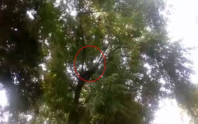 Man Climbs Tree After Wife Left Home