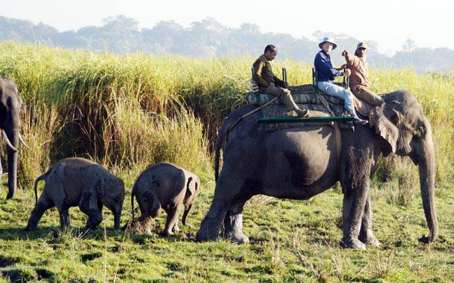 Elephant safaris are popular in the Kaziranga National Park. Picture courtesy: Flickr/Malcolm Williams/Creative Commons