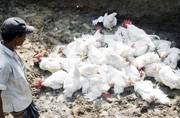 What is bird flu? Symptoms, prevention and treatment; All you need to know