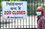 Will bird flu outbreak in Delhi zoo hit chicken trade? Capital on alert