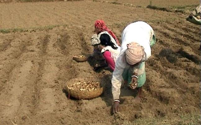 Farming in West Bengal