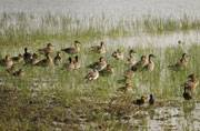 The Chambal valley is a paradise for bird watchers.