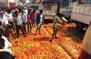 Tomato on its toe: At 50 paise a kilo, Chhattisgarh farmers prefer crushing their produce under trucks