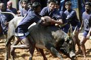 Jallikattu fallout? Why Tamil Nadu traders are boycotting Coke and Pepsi