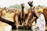 Truck filled with camel meat seized at Delhi's Vasant Kunj