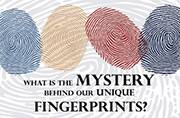 What is the mystery behind our unique fingerprints?