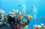 Coral Reefs are dying as bleaching intensifies: Limiting climate change needs urgent attention