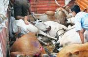 Yogi Adityanath orders blanket ban on cow smuggling, directs closure of slaughterhouses