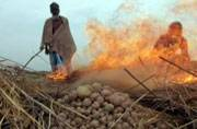 West Bengal: Farmers set crop on fire due to inadequate cold storage facility