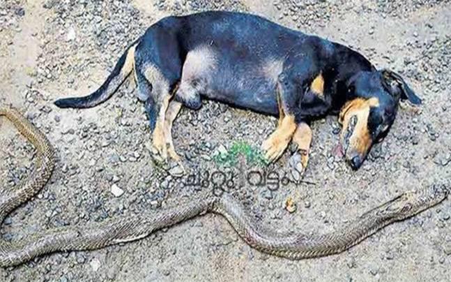 Dog dies saving family from cobra after an intense battle