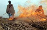 West Bengal government to purchase potatoes from Malda farmers to reduce debt