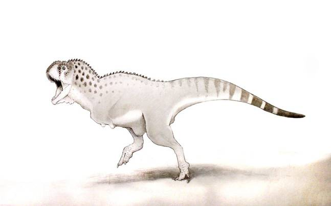 Fossil Belonging To One Of The Last Dinosaurs Found In Phosphate Mine in Morocco (Twitter: University of Bath)