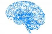 Scientists discover 52 new genetic roots for intelligence