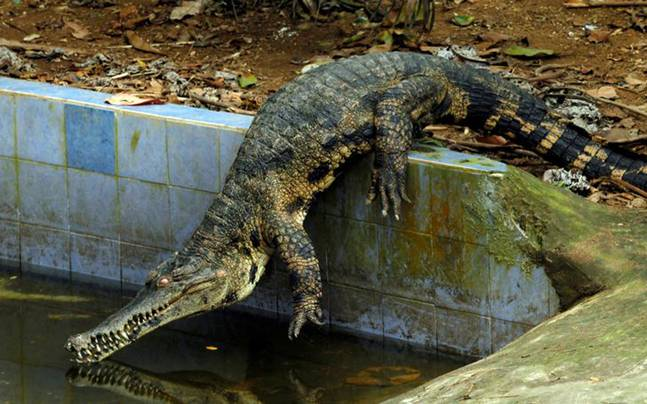 Man high on ice tries to have sex with crocodile in Australia