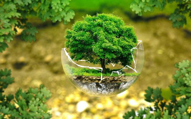 Environmental Impact Survey India Placed At A Lowly 75th
