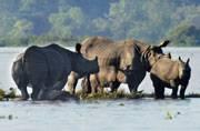 Devastating Assam floods put wildlife in peril, 58 animals killed in Kaziranga National Park