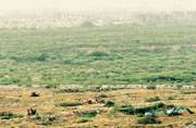 NGT pulls up Haryana government, Bharti Realty over felling of trees in Aravallis on Eid weekend