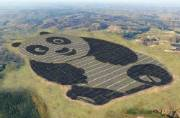 China's cute Panda Solar Plant to reduce 2.74 million tons of carbon dioxide emissions