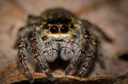 Spider named after a Harry Potter character