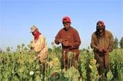 How US may have made Afghanistan the world's biggest drug breeding hub