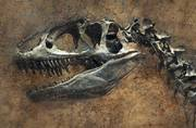 Frankenstein Dino: The missing link in the evolution of Dinosaur finally out