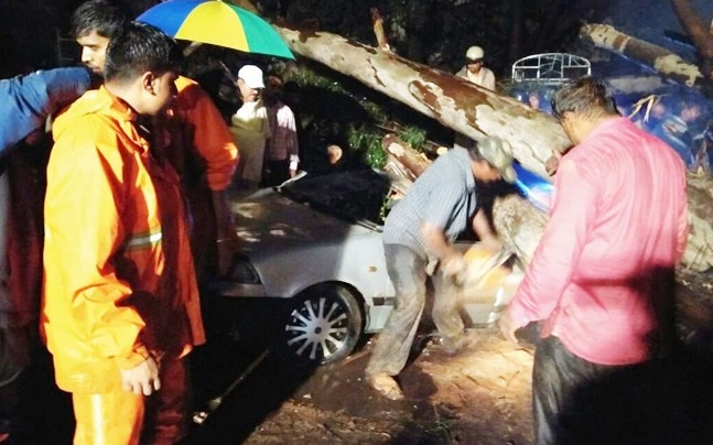 Traffic was thrown out of gear as uprooted trees blocked the roads. (ANI Photo)