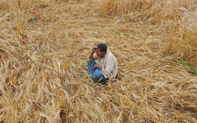 Farmers in Madhya Pradesh got little money as insurance claim for crop loss under PM Fasal Bima Yojana.