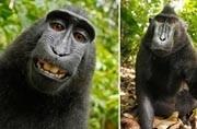 Monkey business: Photographer wins copyright lawsuit in 'monkey selfie' case