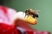We lost nearly 75 per cent of the insect population just in the last 20 years: Reasons unknown