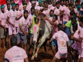 EPS-OPS visit Alanganallur Jallikattu competition, you can live stream here