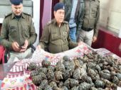 Delhi: Cops uncover exotic tortoise being smuggled abroad