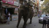 Delhi: Elephant goes on rampage in Laxmi Nagar, 2 hurt