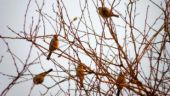 The great Indian bird: Agra's conservation efforts pay off as sparrow population rebounds