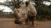 World's last male northern white rhino Sudan dies at 45