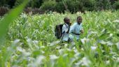 Saharan farming began more than 10,000 years ago