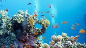 Save Coral Reefs: Coral reefs protect coasts from cyclones, finds study